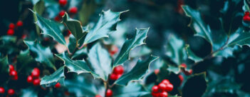 ADVENT Week Four: A Time for Celebration – Fourth Sunday of Advent